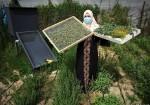 سيدة فلسطينية تمارس الزراعة العطرية