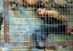 """طفلٌ ينزِف.. أمام قضاء """"إسرائيل""""!"""